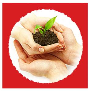 Логотип компании Зернышко